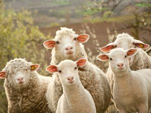 Regionalmarke Eifel: garantierte Herkunft und transparente Produktion